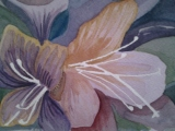 (LL) I put some cool washes over the backgroun to try and unite it- hoping to make the flowers stand out