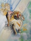 Paul's Dog