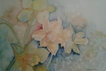 Daffodils 2014