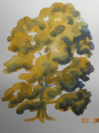 Deciduous tree using yellow ochre and ultramarine blue- paint the whole tree in yellow and then add the blue. Let it dry and glaze over the dark areas- repeat until you are happy with the contrast.