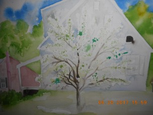 W.I.P Here I try a white Apple tree against a white house in Norwich VT ( note some fo the green on here is masking fluid)
