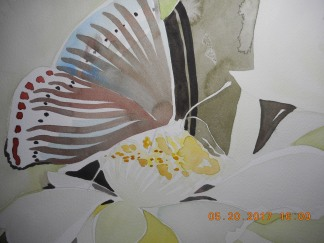 W.I.P. after teh first class- Butterflies and Blooms Project...very early stages