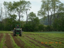 Photo of tilling around the rows