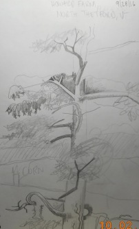 Value sketch of this monster pine at the Howard farm